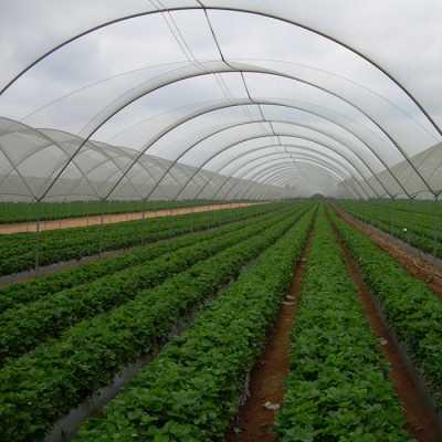 Выращивание клубники на участке