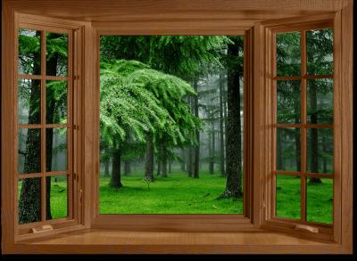 Деревянные окна из дуба